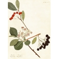 New Vintage Botanicals Roomset 3 Image D