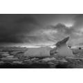Icebergs in Cierva Cove