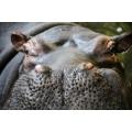Hippo up Close