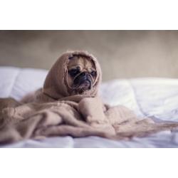 Pug Blanket