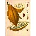 Ancient Mayan Food