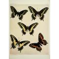 Butterfly Plate XL