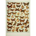 Butterfly Plate XVII