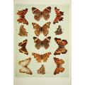 Butterfly Plate XX