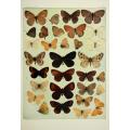 Butterfly Plate XXV