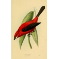 Vintage Bird Illustration 19