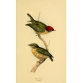 Vintage Bird Illustration 20