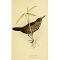 Vintage Bird Illustration 23