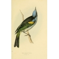 Vintage Bird Illustration 24