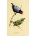 Vintage Bird Illustration 25