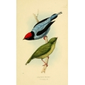 Vintage Bird Illustration 26
