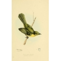 Vintage Bird Illustration 27