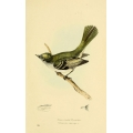 Vintage Bird Illustration 28