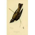 Vintage Bird Illustration 29