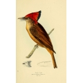 Vintage Bird Illustration 30