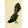 Vintage Bird Illustration 32