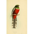 Vintage Bird Illustration 34