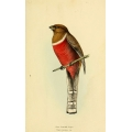 Vintage Bird Illustration 35