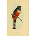 Vintage Bird Illustration 37