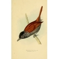 Vintage Bird Illustration 38