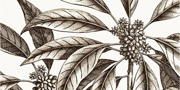 Exquisite New Vintage Botanicals - exclusive to workART